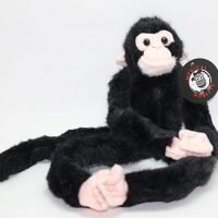 Chimpanzee Medical Monkey